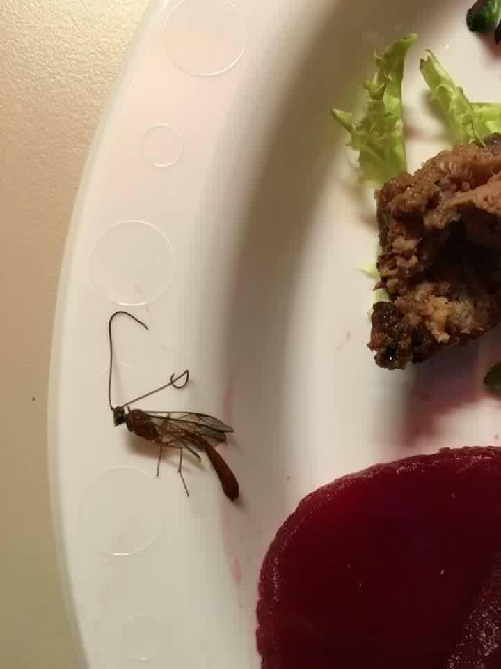 Wheatstone food quality slammed on social media