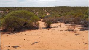 Coburn landscape